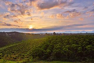 咖啡果园, 咖啡产地